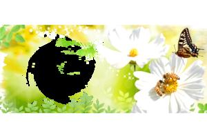 Шаблоны онлайн для кружек с цветами